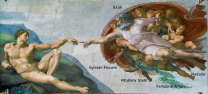 creation of adam labelled sylvian